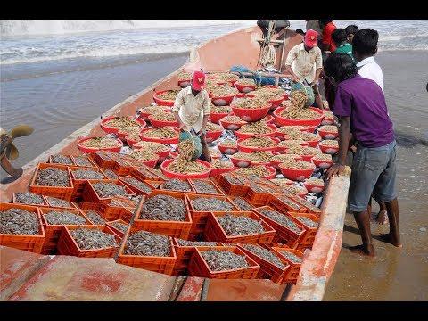 Amazing Cast Net Fishing - Commercial Boat Fishing