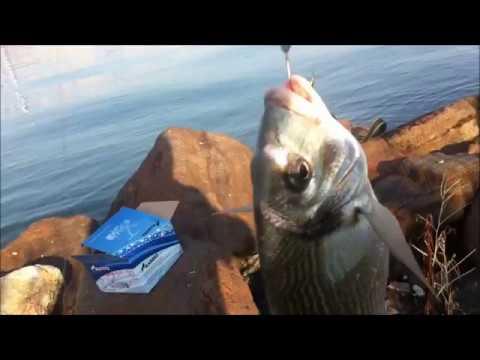 kıyıdan çipura avı bayraklı izmir