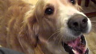 CUTE DOG WANTS TO BE PET