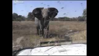 怒った象に襲われ、車のフロントガラスを割られる