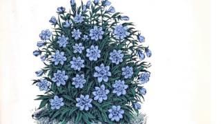 Marihiko Hara / Flora (Album Sampler)