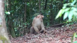 Jungle Trek -  Sumatra, Indonesië