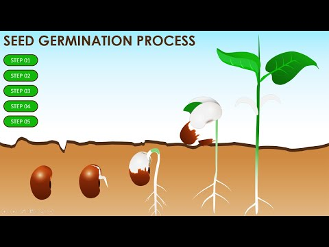 Free PowerPoint Template On Seed Germination #Science #Education #School Children   Free Download