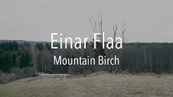 Einar Flaa - Mountain Birch