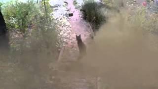 Cat with Donbass   Суровый кот с Донбасса