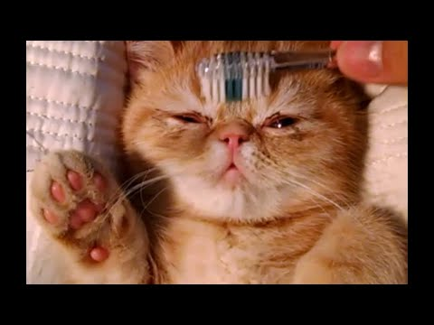 This Cat Has Nailed The Art Of Pampering