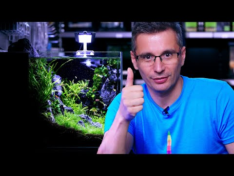 build-a-better-nano-planted-tank---with-a-budget-co2-system