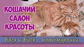 Кошачий салон красоты. Ласковые котята вылизывают друг друга