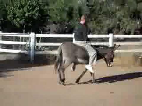 Donkey's show