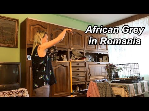 Romania - African Grey Parrot Owner Interview