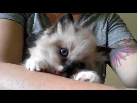 Dog lick the catKaynak: YouTube · Süre: 1 dakika42 saniye
