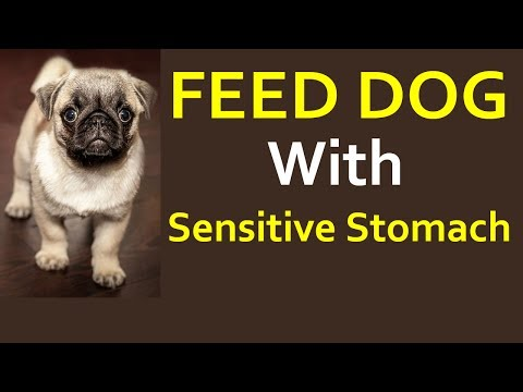 How To Feed Dog With Sensitive Stomach - Dog Food For Sensitive Stomachs And Allergies