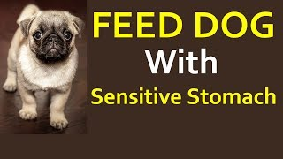 How Feed Dog Sensitive Stomach