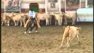 Nicola De Filippis Performance Horses