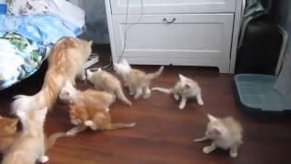 Кошка упала котята, котята в рассыпную))