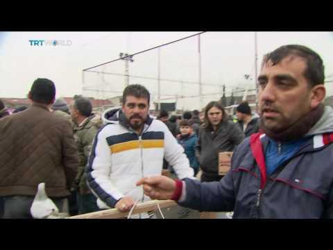 Money Talks: Istanbul's pricey pigeon market