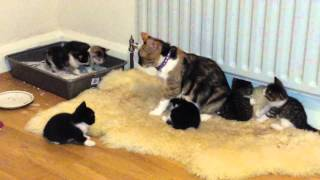 Cat rejects her 4 weeks old kittens