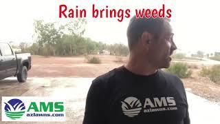 Phoenix Monsoon Rainfall Brings In The Weeds 7/12/18