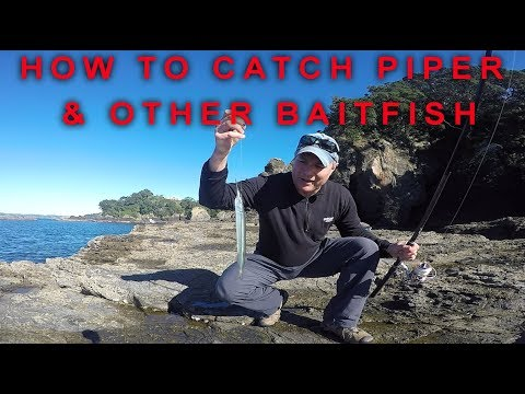 How To Catch Baitfish Like Piper, Mackerel And Mullet