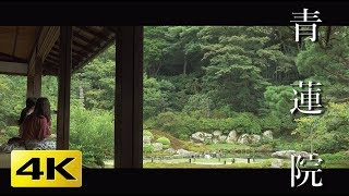 [4K] 青蓮院  京都の庭園 Shoren-in Temple [4K] The Garden of Kyoto Japan