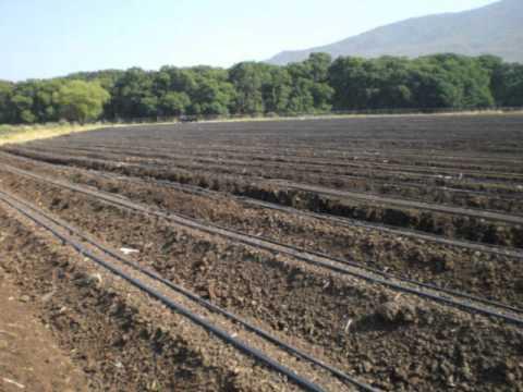 Sistema de riego para papa cebolla arandano papaya etc for Sistema de riego
