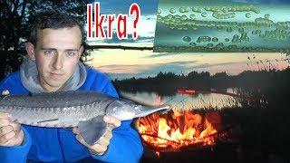 Znaleziona ikra ryb - flaszka na urodziny - Jesiotr na szprotkę - wędkarstwo