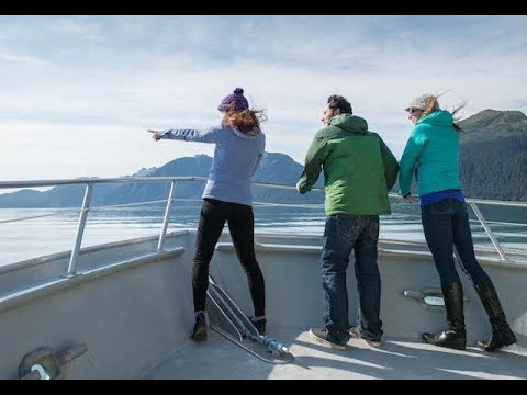 Resurrection Bay Wildlife Cruise - Seward, Alaska