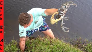 GIANT MUD CRAB Digging in FLORIDA!