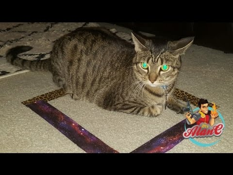 Cat Trap Experiment - Cat In A Box - How To Trap A Cat - Cat Circles & Cat Trap Experiment - Cat In A Box - How To Trap A Cat - Cat ... Aboutintivar.Com