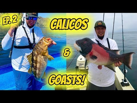 Cedros Ep.2: Yellowtail, Calico Bass, & Sheephead!