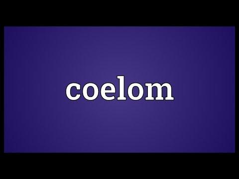 Header of coelom
