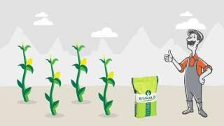 Кукуруза: лучшие гибриды для фантастического урожая