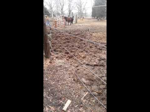 *Animal Control 'seizing' process on 2/4/14-04of13n