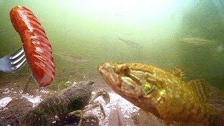 Раки СОБРАЛИСЬ СО ВСЕГО ВОДОЕМА! Сосиски работают! Подводная съемка