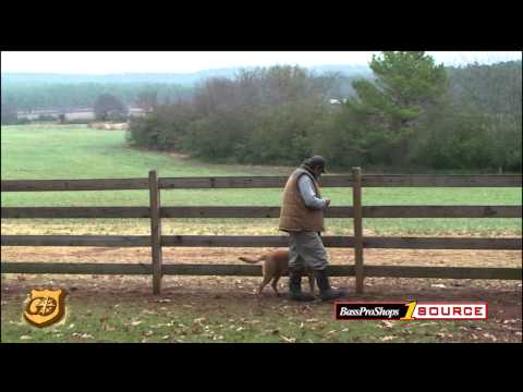 Gundog Training - The Heel Command Drill