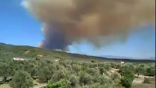 Πυρκαγιά στην Εύβοια 3