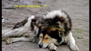 Грустная история собаки, до слёз(Нереально грустно:С., 2014-05-25T12:07:13.000Z)