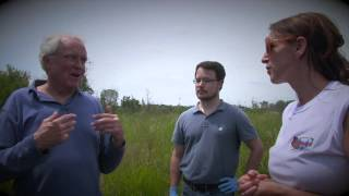 Outdoor Wild  wetlands Part 2  IL .  Neal Marsh
