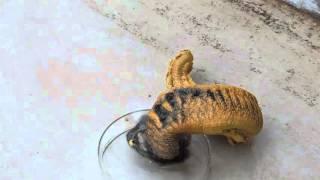 بالفيديو.. مادة كيميائية تتحول لتشبه الثعابين
