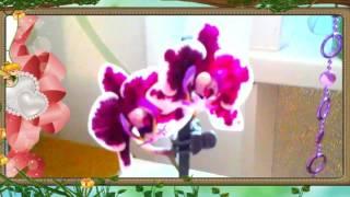 ❀Орхидея. Фаленопсис мини РЕД СПОТ \ Orchid.  Phalaenopsis mini RED SPOT(, 2016-05-29T10:14:49.000Z)