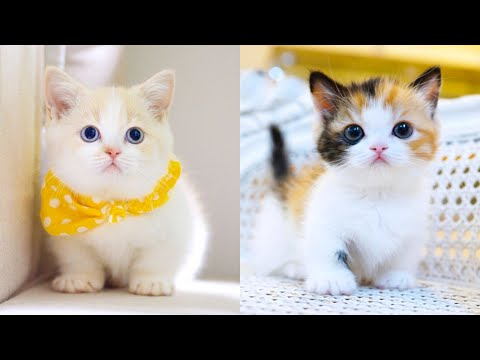 Baby Cats - Cute and Funny Cat Videos Compilation #15 | Aww Animals