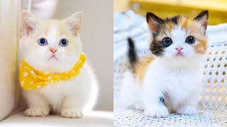Baby Cats - Cute And Funny Cat Videos Compilation 15  Aww Animals