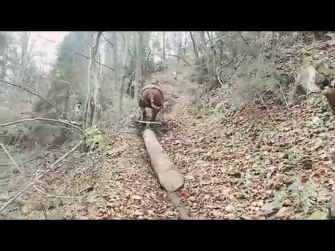 Probe cu cai la pădure!!!