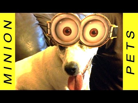 Best of Minion Pets - Funny Dogs and Cats Wearing Minions Costumes YouTube Music Video 2018