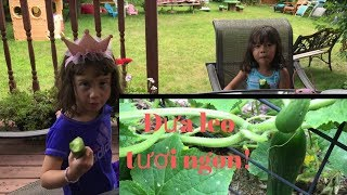 Hai bé Lai Tây hái dưa leo và ăn tại vườn // Cuộc Sống Canada