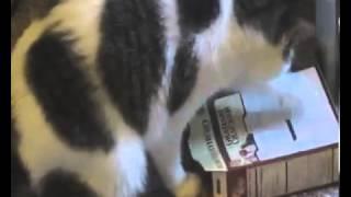Ржачные кошки 1