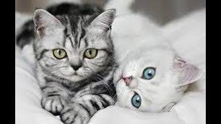 Все наши кошки   Сколько у нас кошек   Zoo Life  