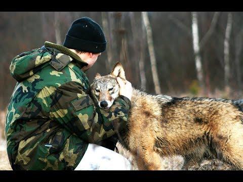 Волчица по имени