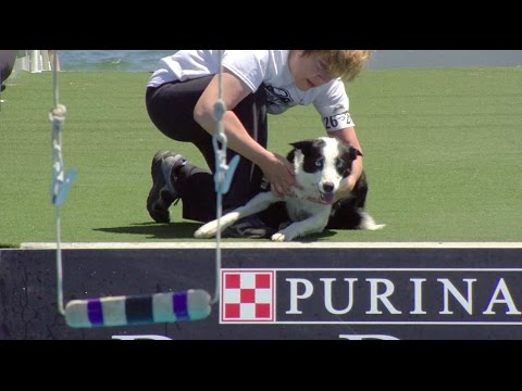 Full Fetch It Competition - 2017 Purina® Pro Plan® Incredible Dog Challenge® Eastern