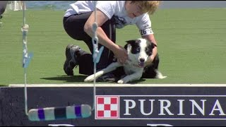 Full Fetch It Competition  2017 Purina® Pro Plan® Incredible Dog Challenge® Eastern